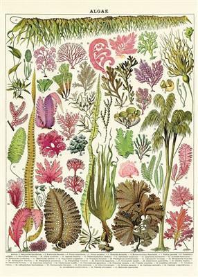 פוסטר צמחים סגולים