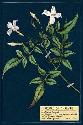 גלוית צמחי בר 5#