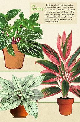 גלוית צמחים 8#