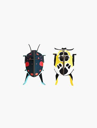 זוג חיפושיות תלת מימדיות להרכבה