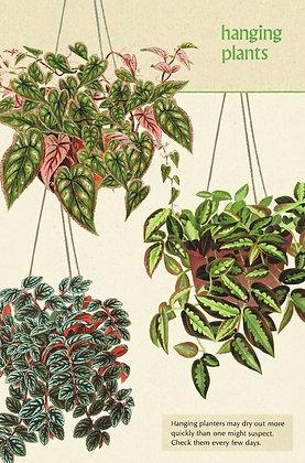 גלוית צמחים 3#