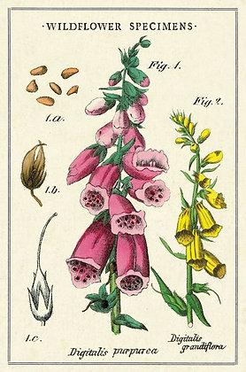גלוית פרחי בר 1#