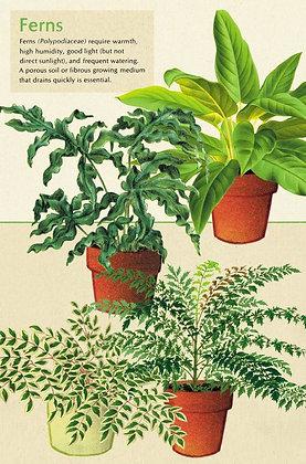 גלוית צמחים 6#