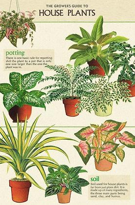 גלוית צמחים 4#