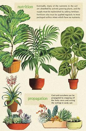 גלוית צמחים 1#