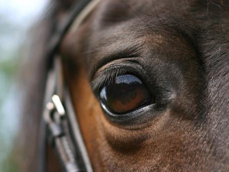 Your Horse's Amazing Eyes