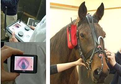 Endoscopy and Gastroscopy Veterinarian coastal equine services south carolina