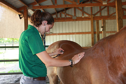Equine Vet, Horse Veterinarian, Lameness, Vaccines, X Ray, Emergency Mobile vet, Ambulatory Equine sports medicine, Lameness evaluations, Charleston, South Carolina