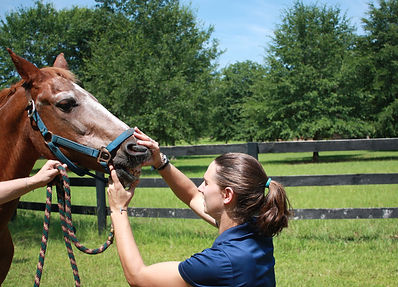 Dentistry  Veterinarian coastal equine services south carolina