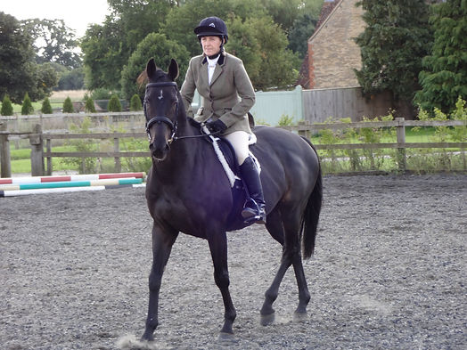 Alison Lincoln Equine Sports Coach Brown Horse