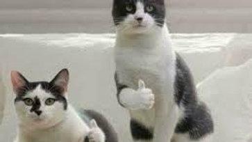 Franki's Kit Cat Fudge