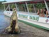Crocodile.jpeg