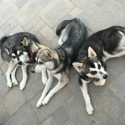 Puka, Juno and Sir Dallas