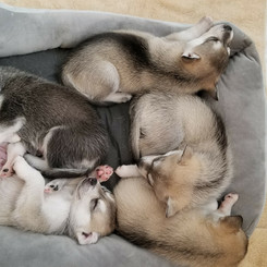 SLEEPING PUPPIES 3.jpeg