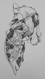 thumbnail_decaying-sunflower-leaf-ink-dr