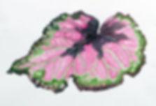 thumbnail_Begonia_leaf_painitng[1].jpg