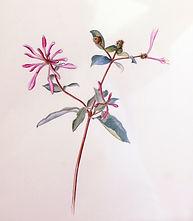 thumbnail_Honeysuckle_painting_2[2].jpg