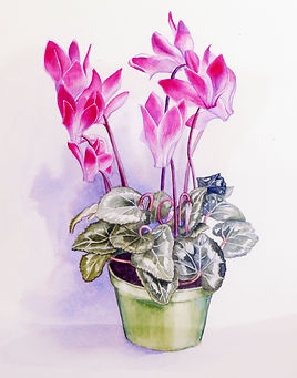 Potted_cyclamen_painting.jpg