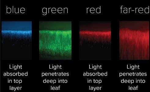 Light penetration into leaf graph