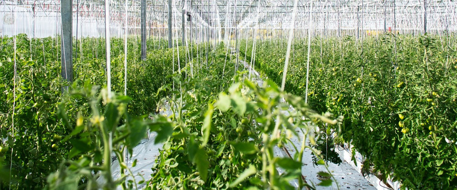Indoor AgTech: Building the Next Generation of Grower