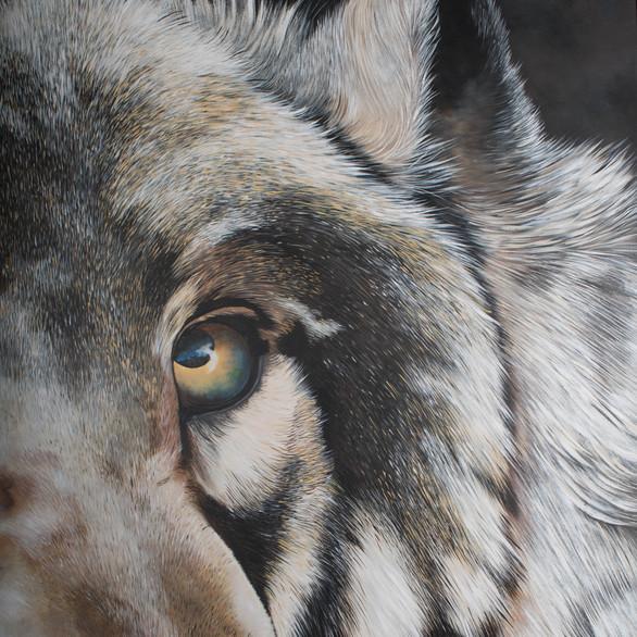 Greywolf Golf Course Series - Wolf Pack Power