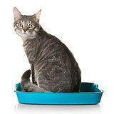 Cute cat in plastic litter box isolated