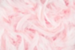 Pink Feathers_edited.png