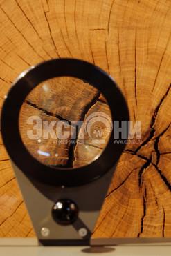 Годичные кольца дерева_Tree rings 03_lp