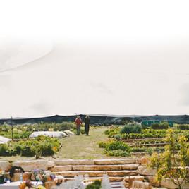 תמונה לגינה1.jpg