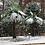 Thumbnail: Windmill Palm Tree