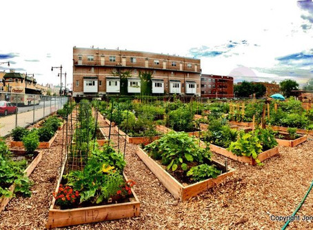 Natural Remedies and Society: Creating a Community Garden in Your Area