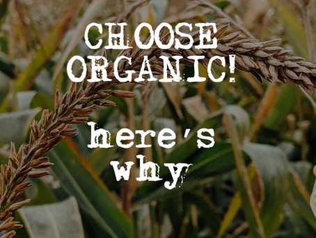 The Importance of Organic Food