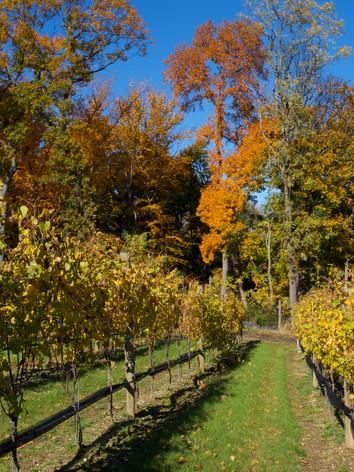 Fall Landscape 3.jpg