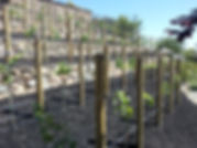 Vegetable Boxes and Vineyard