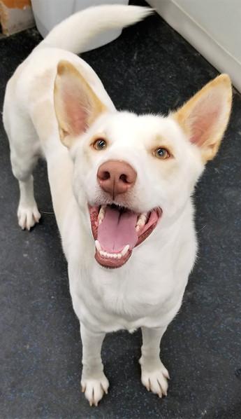 adopt a pet 2.jpg