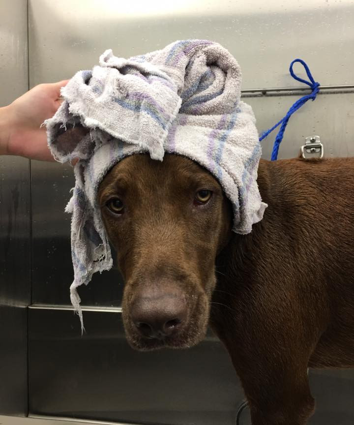 dog with towel.jpg