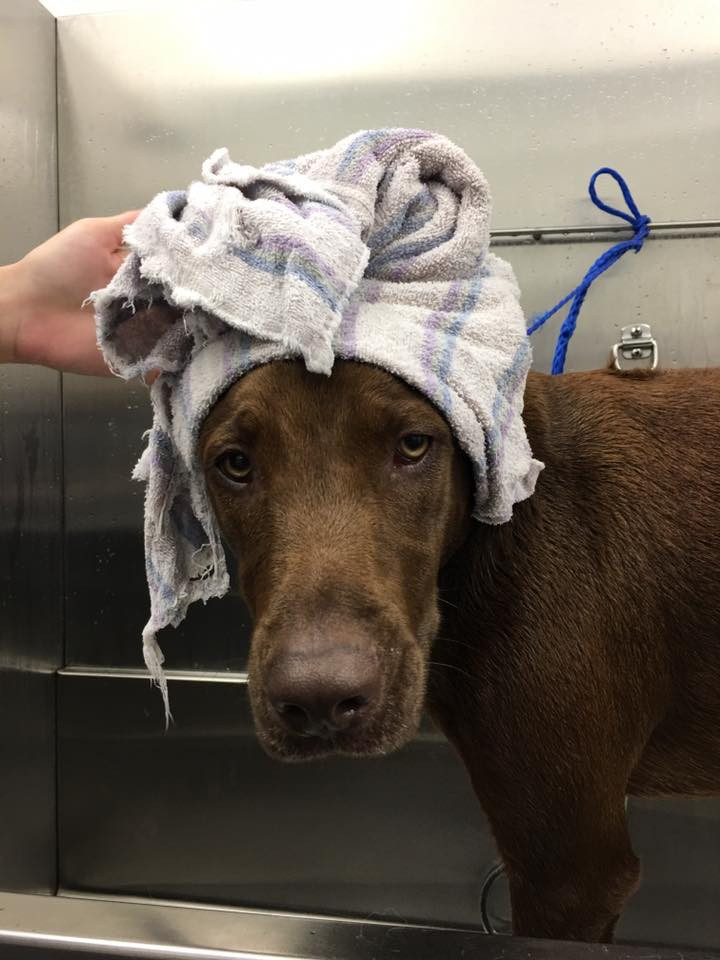 dog with towel.jpg