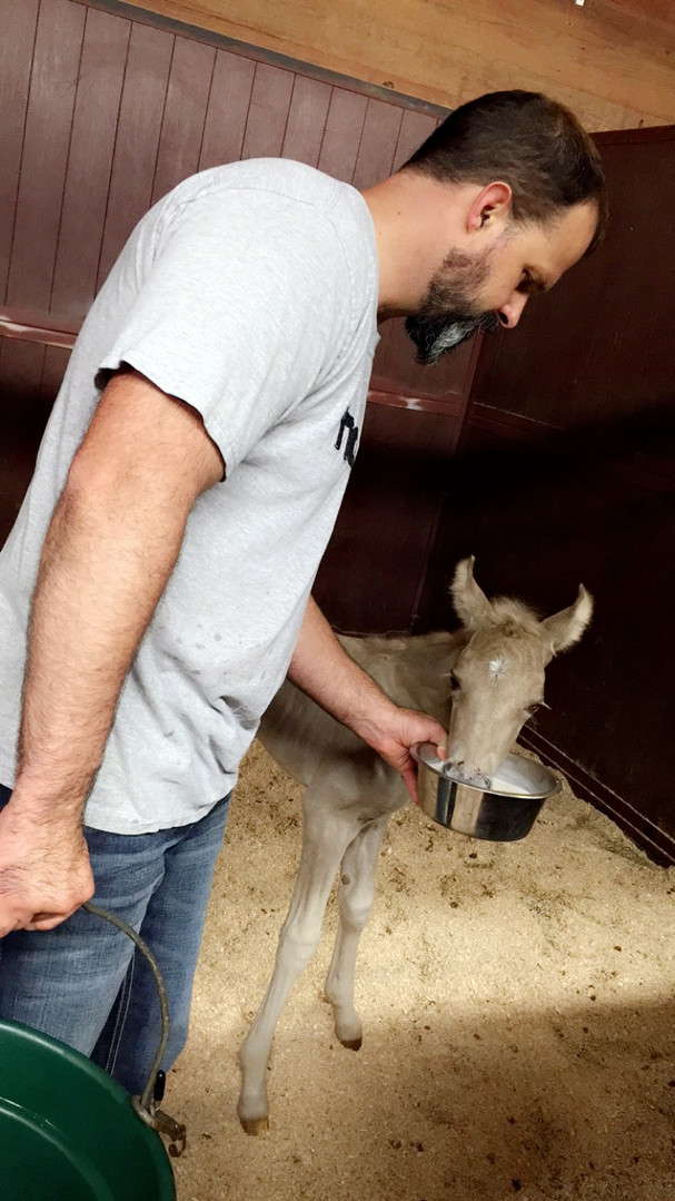 Dr.Leighr with Foal