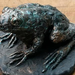 Uncommon Toad