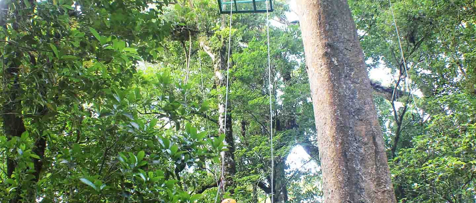 Monteverde Costa Rica zipline adventure guests with child rappelling