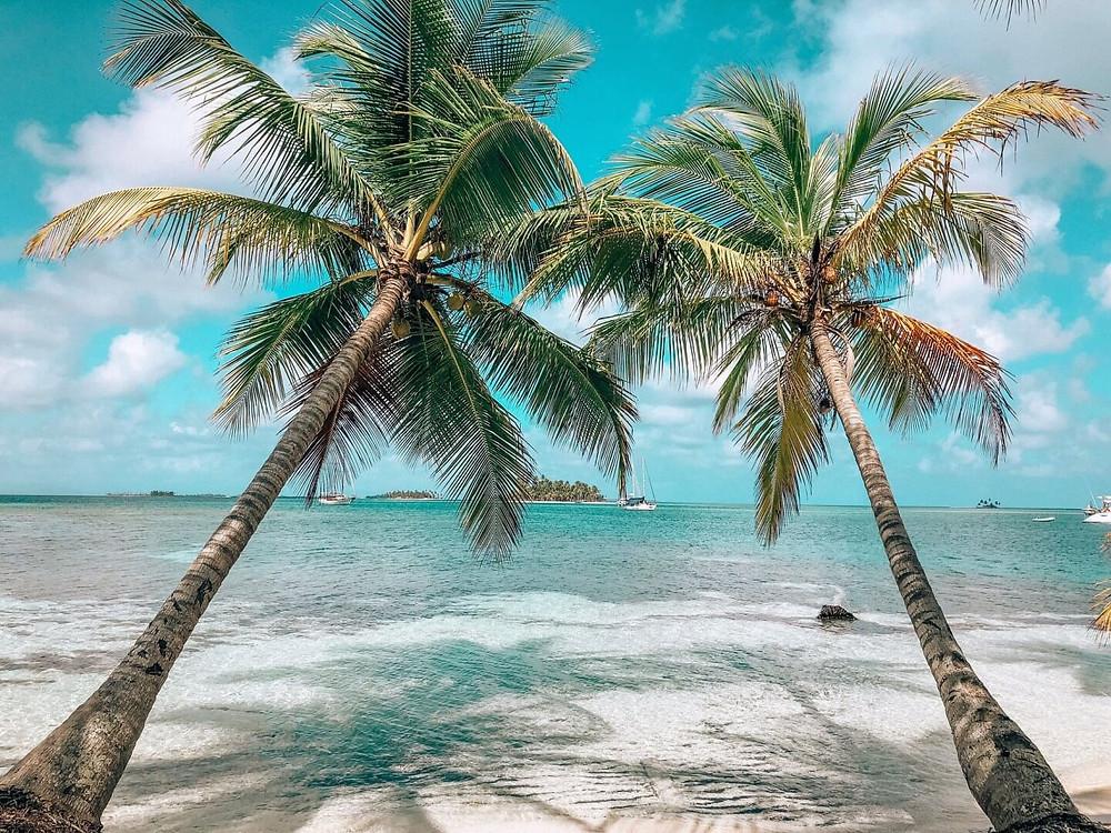 San Blas islands in Panama palm trees over clear ocean water