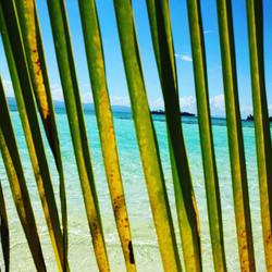 Paradise ocean behind palm leaf