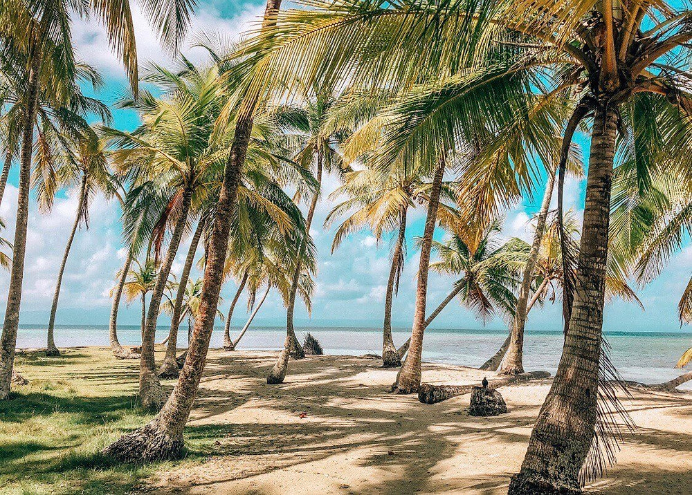 typical and remote San Blas Panama island in the Lemon Keys with Palm trees and beautiful clear ocean water