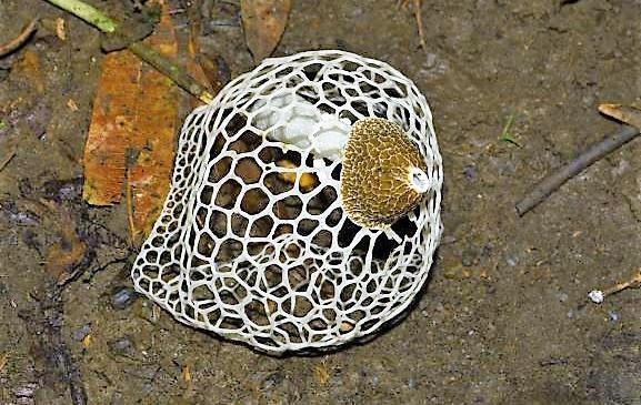 Darian Gap Jungle expedition endemic shell