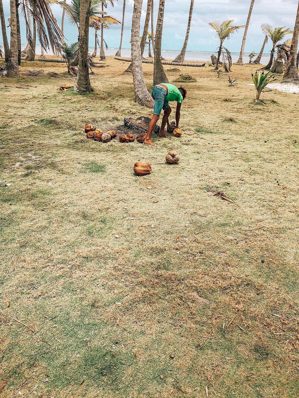 san blas panama island with kuna local collecting coconuts