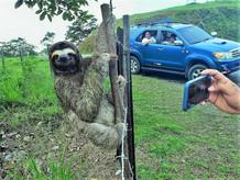 Wildlife encounter on the way to San Blas