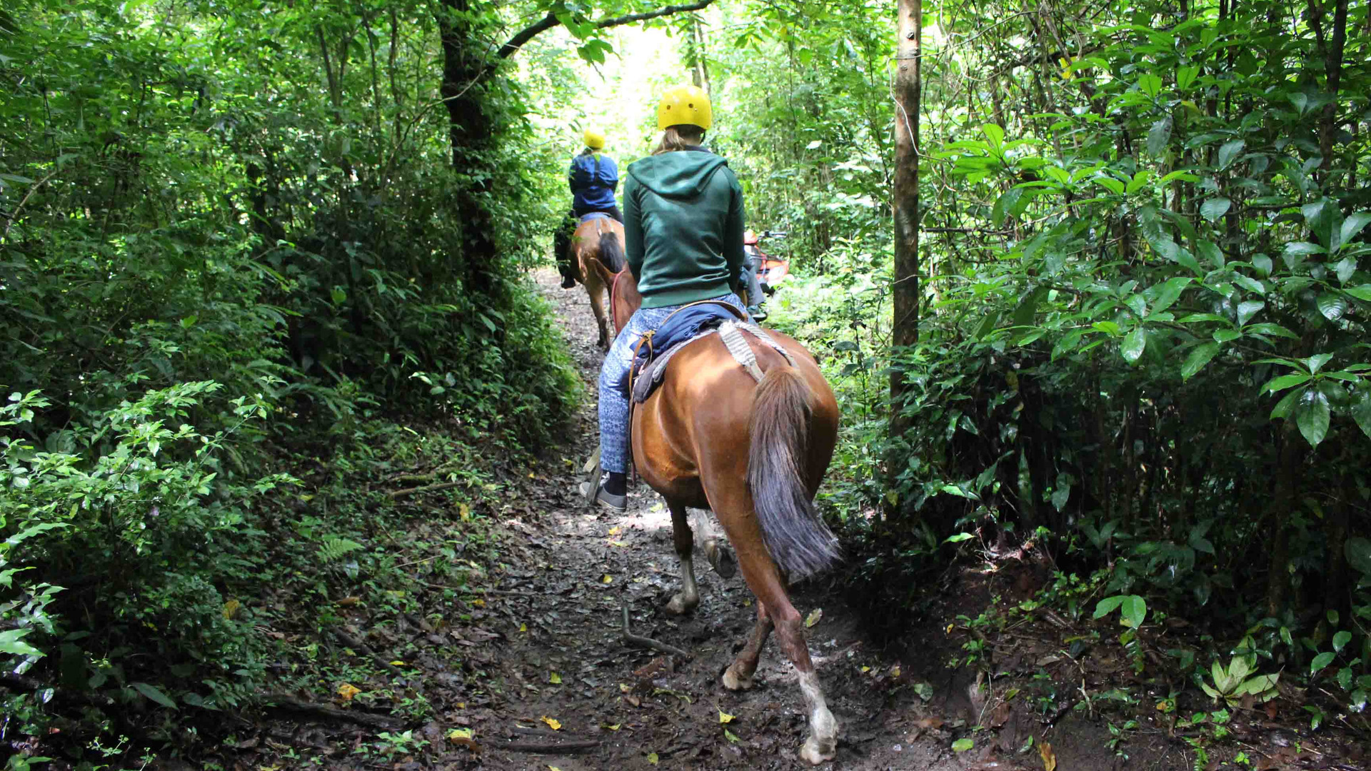 Monteverde Costa Rica guided Horseback riding tour riding on forest trail through rainforest guests wearing rain jackets and helmets