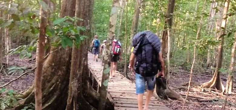 Darian Gap Jungle expedition group hiking on wood bridge path