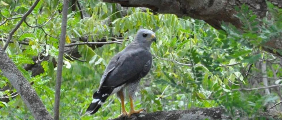 bird in Tamarindo guanacaste Zipline tour costa rica