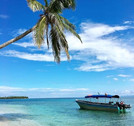 San Blas Day tour lancha under palm tree